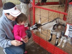 Feeding the Goats at the Fair
